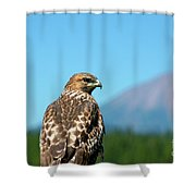 Red-shouldered Hawk With Mt. Mclaughlin In The Background Shower Curtain