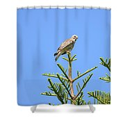 Red-shouldered Perch Shower Curtain