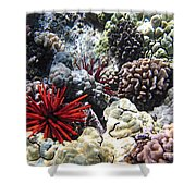 Red Slate Pencil Urchin Shower Curtain