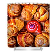 Red Snail Shell Shower Curtain