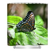 Red-spotted Purple 4172 Shower Curtain