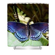 Red-spotted Purple 4257 Shower Curtain