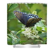 Red-spotted Purple Butterfly On Privet Flowers Shower Curtain