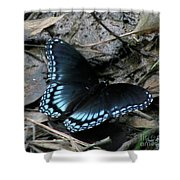 Red Spotted Purple Swallowtail Butterfly Shower Curtain