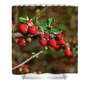 Red Spring Buds Shower Curtain