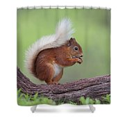 Red Squirrel Curved Log Shower Curtain