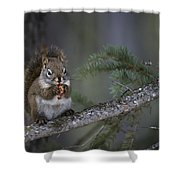 Red Squirrel Having Lunch Shower Curtain
