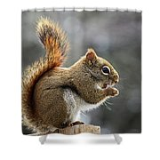 Red Squirrel On Wooden Fence II Shower Curtain