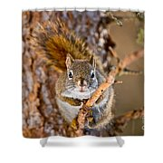 Red Squirrel Pictures 144 Shower Curtain