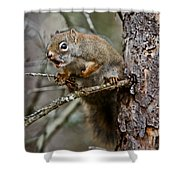 Red Squirrel Pictures 161 Shower Curtain