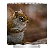 Red Squirrel Pictures 170 Shower Curtain