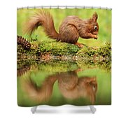 Red Squirrel Reflection Shower Curtain