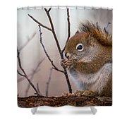 Red Squirrel - Sciurus Vulgaris Shower Curtain