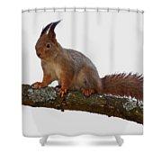 Red Squirrel Transparent Shower Curtain