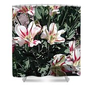 Red Stripe Tulips Shower Curtain
