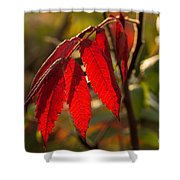 Red Sumac Leaves Shower Curtain