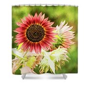Red Sunflower, Provence, France Shower Curtain