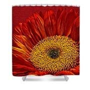 Red Sunflower Viii Shower Curtain
