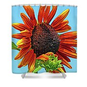 Red Sunflowers-adult And Child Shower Curtain
