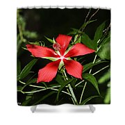 Red Swamp Hibiscus Shower Curtain
