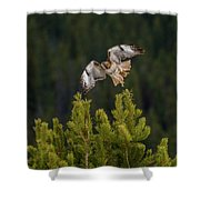 Red-tail Flight At Sunset Shower Curtain