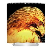 Red Tail Hawk  Shower Curtain