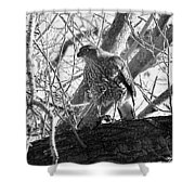 Red Tail Hawk In Black And White Shower Curtain by Deleas Kilgore