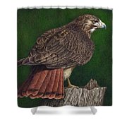 Red Tail Hawk Shower Curtain by Pat Erickson