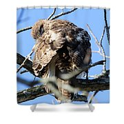Red Tail II Shower Curtain