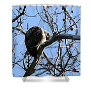 Red Tail IIi Shower Curtain