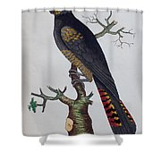 Red-tailed Black Cockatoo 1790 Shower Curtain
