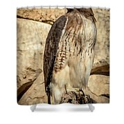 Red-tailed Hawk 4 Shower Curtain
