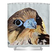 Red-tailed Hawk Portrait Shower Curtain