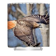 Red Tailed Hawk Flying Shower Curtain