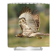 Red Tailed Hawk Hunting Shower Curtain