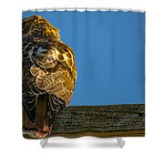 Red Tailed Hawk  IIi  Shower Curtain