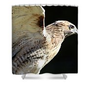 Red-tailed Hawk In Profile Shower Curtain