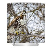 Red Tailed Hawk,  Shower Curtain