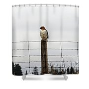 Red Tailed Hawk On The Lookout Shower Curtain