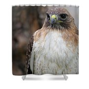 Red-tailed Hawks Shower Curtain