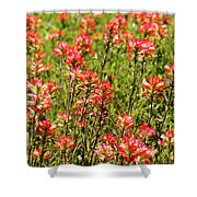 Red Texas Wildflowers Shower Curtain