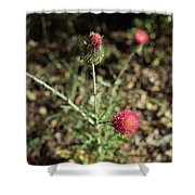 Red Thistle Morning Sunlight Shower Curtain
