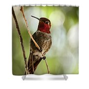 Red Throated Hummingbird Shower Curtain