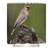 Red Tips Shower Curtain