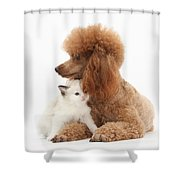 Red Toy Poodle And Kitten Shower Curtain