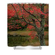Red Tree II Shower Curtain by Gary Lengyel