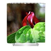 Red Trillium Shower Curtain