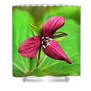 Red Trillium Wildflower Shower Curtain