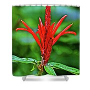 Red Tropical Flower In Huntington Botanical Gardens In San Marino-california  Shower Curtain
