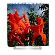 Red Trumpeter Shower Curtain